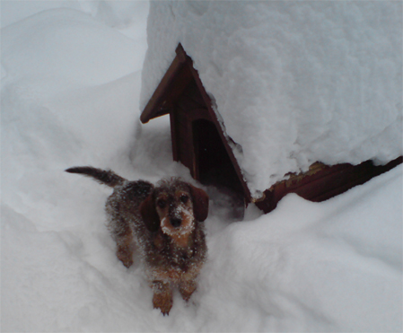 Sofie im Winter